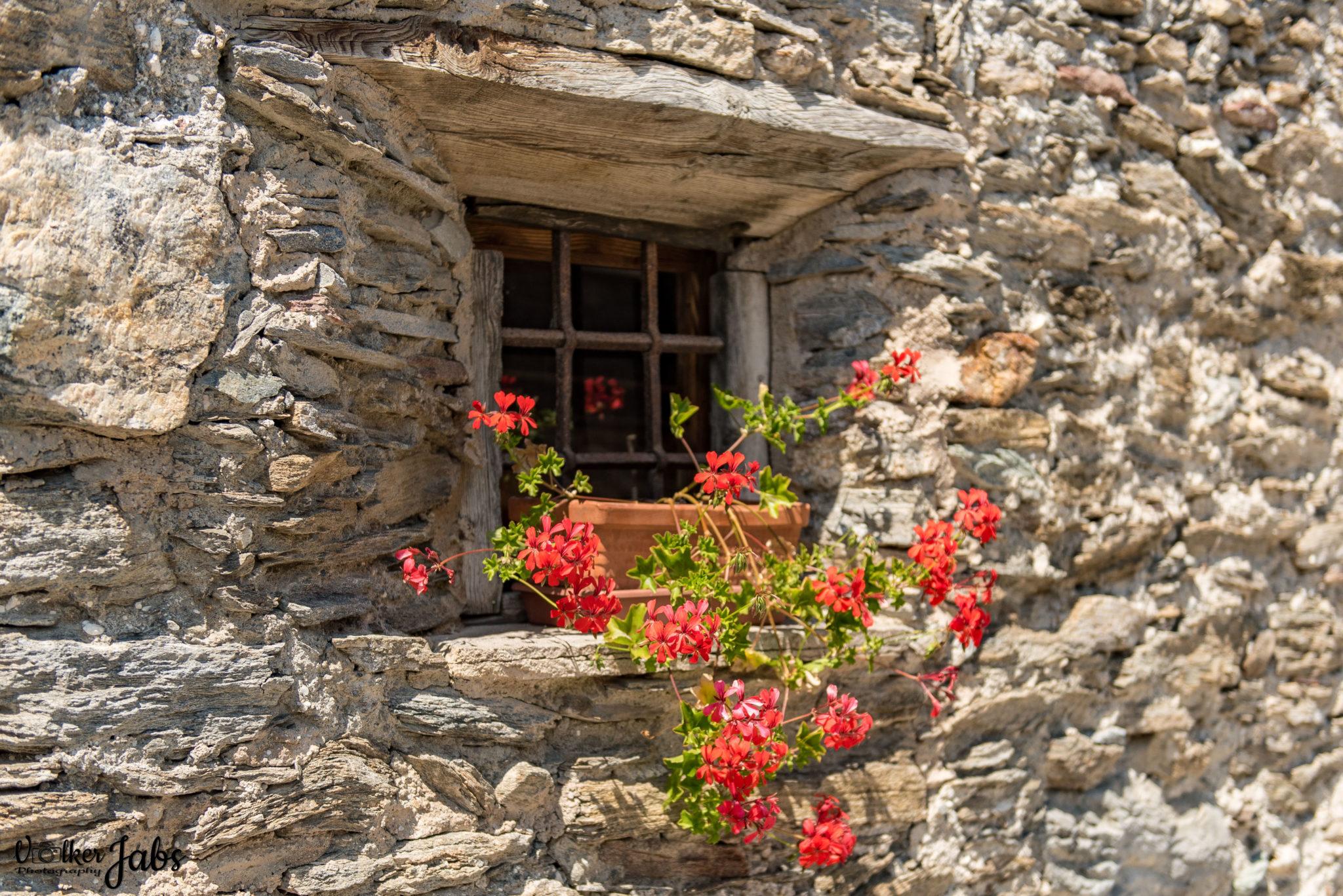 Blumenfenster im Valle Maira