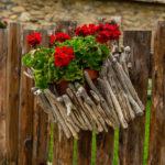 Blumengruß aus dem Valle Maira