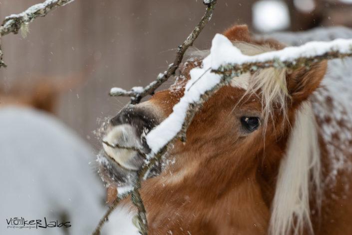 Alternative Ernährung für Pferde