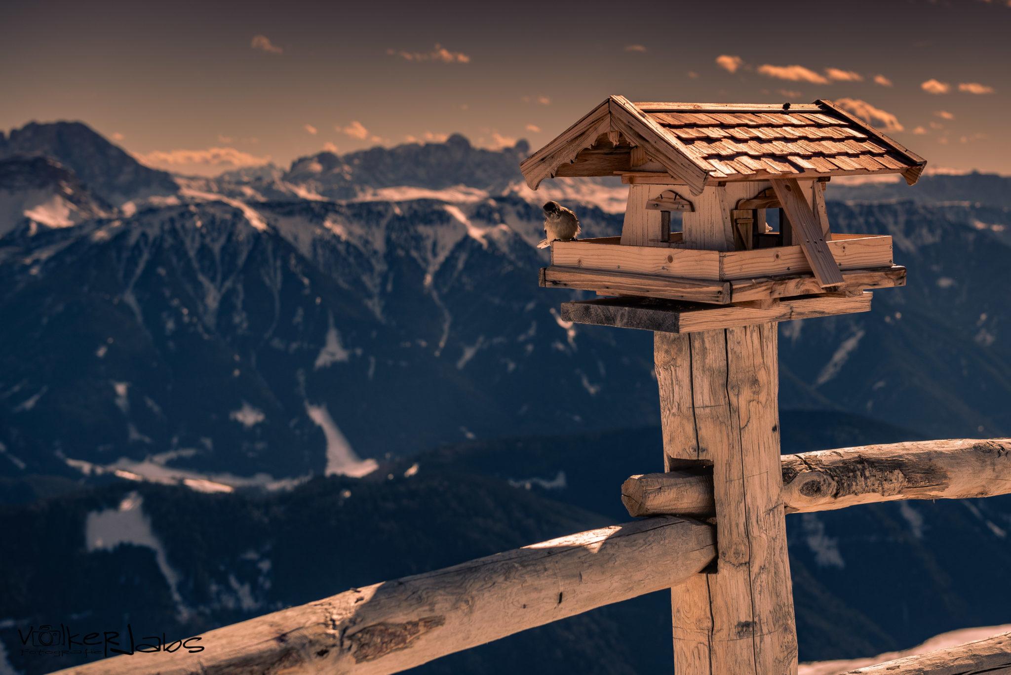 Vogelhaus vor Bergpanorama